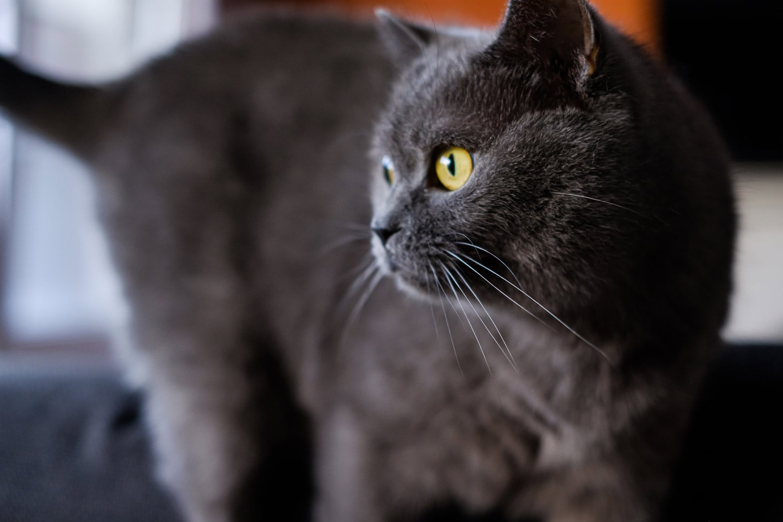 Kat kijkt naar bruid